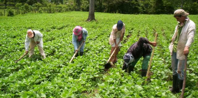 Rural Reconstruction Program – HONDURAS