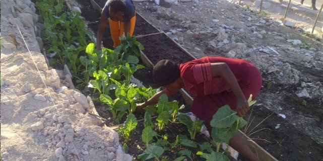 Give Life – Agricultural Co-op in Haiti